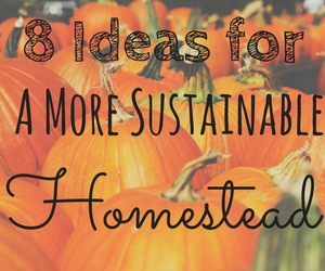 8 Ideas for a more sustainable homestead