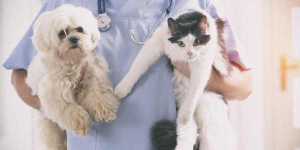 Idealized View on Seeking Pet Care
