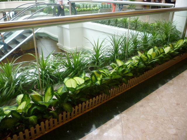 How can corporate plants help you to make your office space better? By Plants for hire Melbourne expert