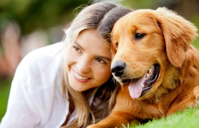 Top Benefits of Acupuncture For Dogs
