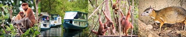 tanjung-puting-kalimantan-borneo-national-park-orangutan-banner1