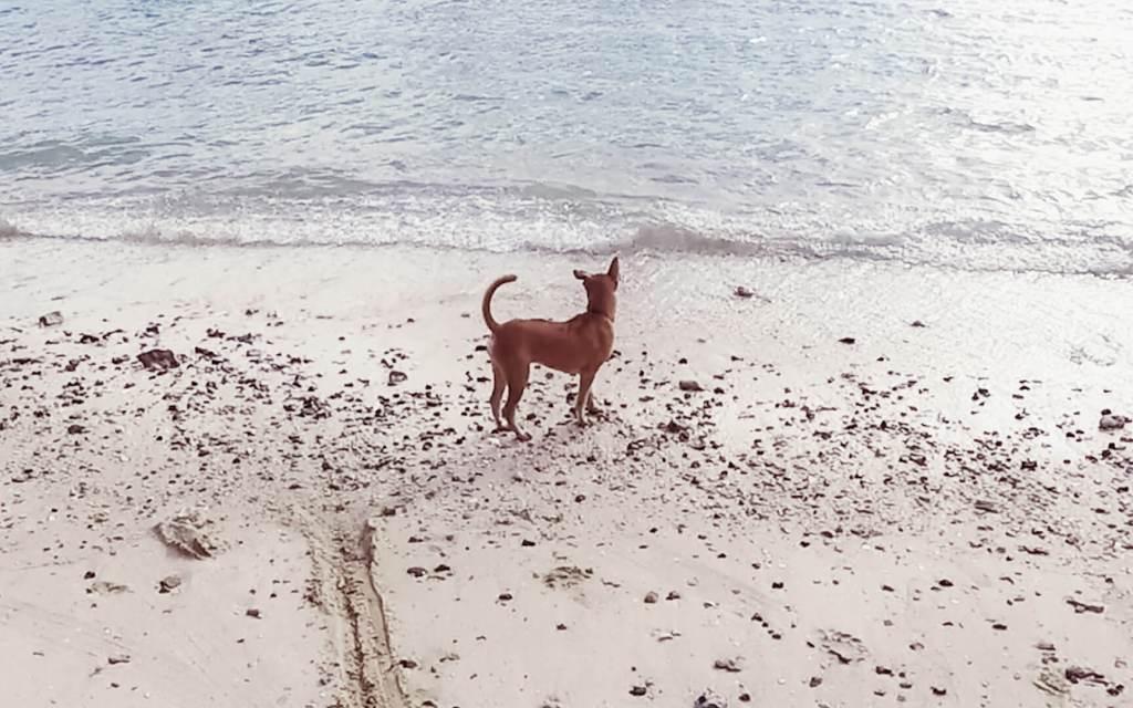 Loh Jark Beach with dog on beach