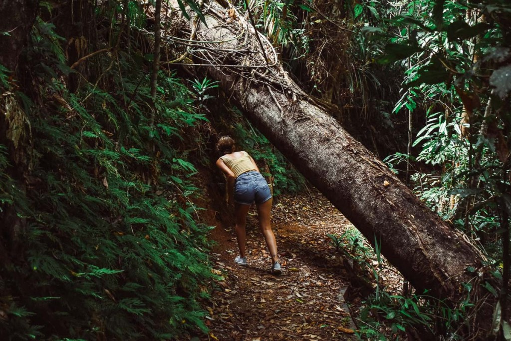 Kerrie dodging trees walking to Nandroya Waterfall