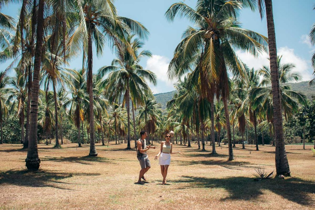 Playing with coconuts in under hundreds of palm trees