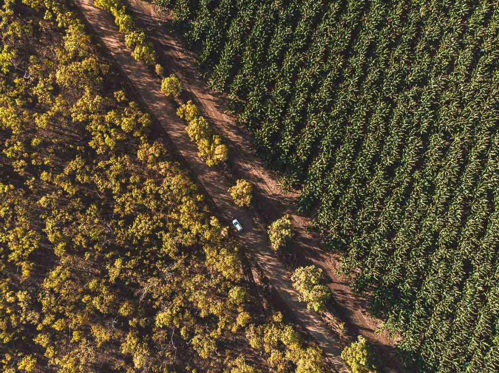 The drive to emerald creek falls in Mareeba drone photo