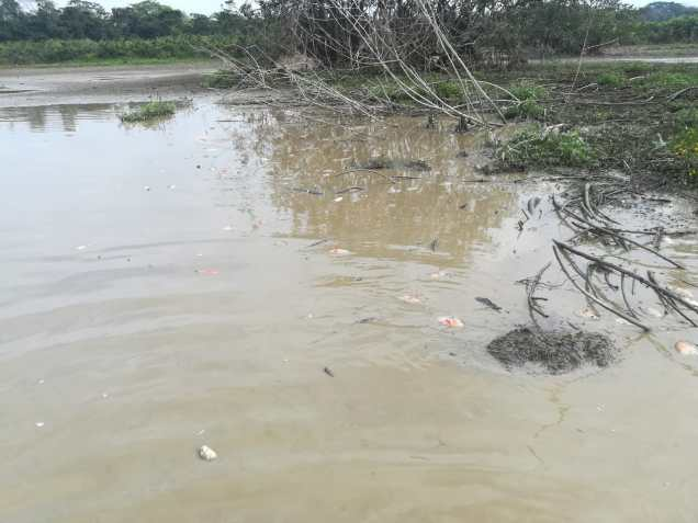 Mortandad de peces en la laguna La Julia