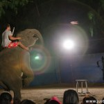 Elephant Show Failed – urine and shit all come out