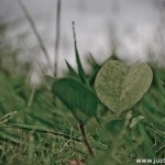 Love it or Leaf It. You don't need to be a polished writer