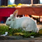 Rabbit appear in crowd city