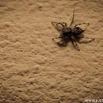 Home Spider