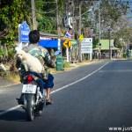 Steady Dog on the motorbike