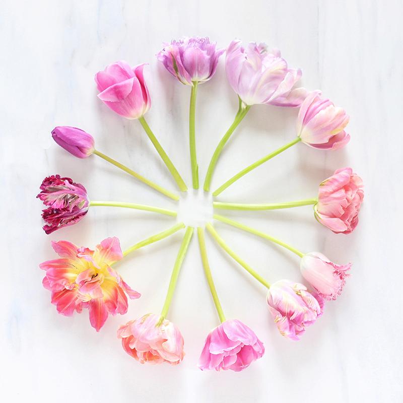 Digital Blooms   May 2016 Free Desktop Wallpaper // JustineCelina.com