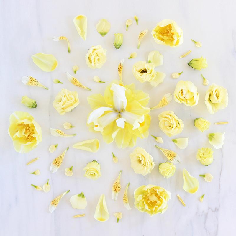 Digital Blooms May 2017 | Free Desktop Wallpapers // JustineCelina.com x Rebecca Dawn Design