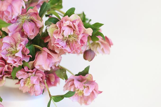 Homemade Flower Food Recipe | Double Bloom Hellebores // JustineCelina.com