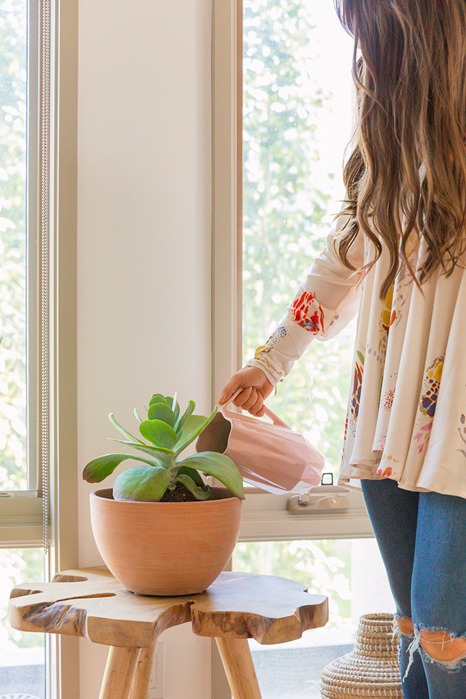 How to Select and Care For Houseplants | Cactus and Succulent Care and Watering Suggestions // JustineCelina.com