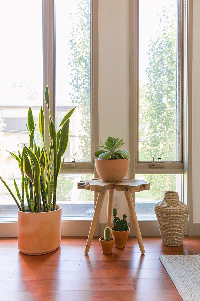 How to Select and Care For Houseplants | Cactus, Succulent Care and Snake Plant Care and Watering Schedules // JustineCelina.com