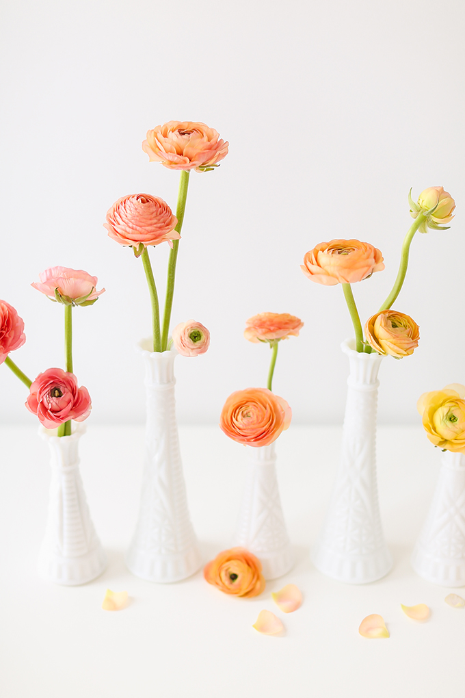 All About Ranunculus | Care & Conditioning Tips | Hand Holding Yellow Ranunculus in Vintage Milk Glass Vases on a White Background | JustineCelina.com
