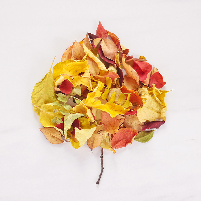 DIGITAL BLOOMS OCTOBER 2019 | FREE DESKTOP WALLPAPER | Free Fall 2019 Leaf Desktop Wallpapers featuring colourful dried leaves on a marble background | Free Fall Leaves Floral Wallpapers for Autumn | Summer / Fall 2019 Tech Wallpapers | FREE Autumn Leaf Wallpapers | The Best FREE Fall/Autumn Tech Wallpapers | Free Floral Tech Wallpapers Fall 2019 // JustineCelina.com