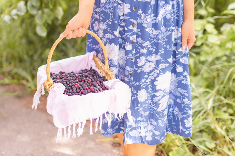 4 Healthy Saskatoon Berry Recipes to Try This Summer + Where to Pick Saskatoons in Alberta | Saskatoon Picking at the Saskatoon Farm in Foothills, Alberta | Alberta Saskatoon Picking in August | Woman holding a wicker basket full of Saskatoon berries | Vegan Saskatoon Berry Recipes | Easy Saskatoon Berry Crisp Recipe | Serviceberry Recipes | Dairy Free, Gluten Free and Refined Sugar Saskatoon Recipes | Calgary Lifestyle and Food Blogger // JustineCelina.com