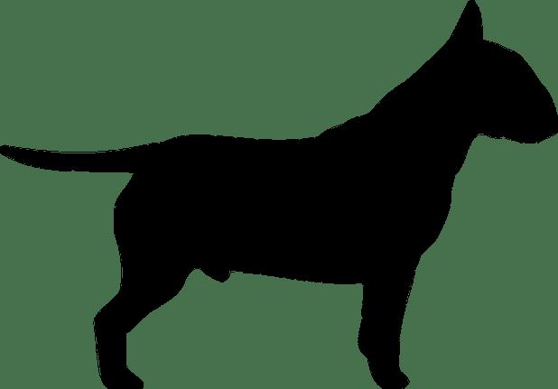 acta relativa a perro peligroso