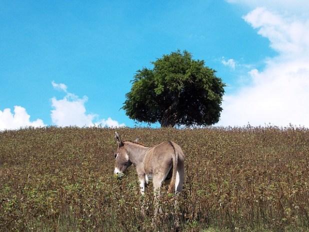 el burro y el retracto