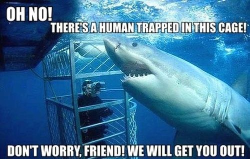 https://i0.wp.com/www.justlaugh.com/wp-content/uploads/2012/11/shark_cage.jpg?w=640