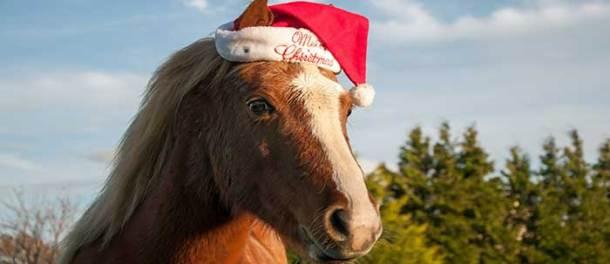 20141224_santa-horse_46883790