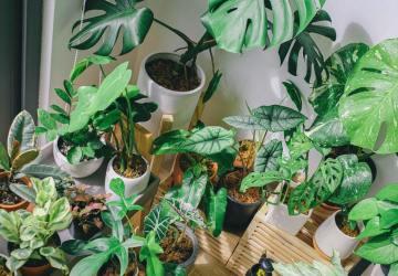 kamerplanten schoonmaken
