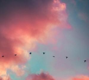 roze wolkenlucht met vogels in de vlucht