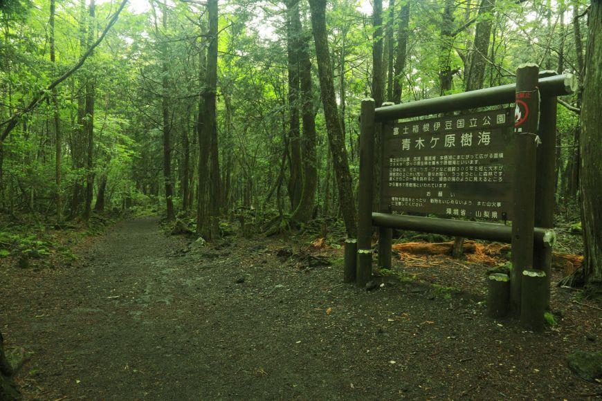 La Foresta dei Suicidi di Jukai