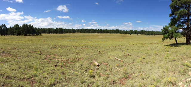 A wide open meadow on the Arizona Trail