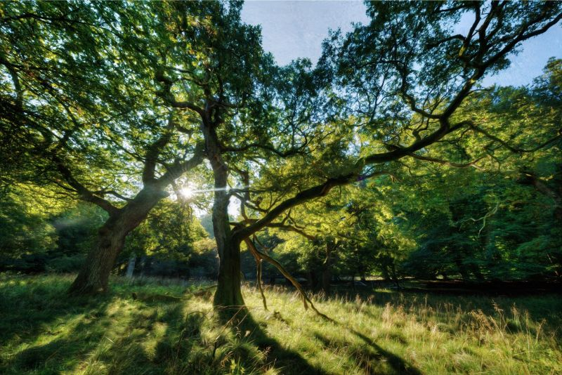 dyrehaven-old-trees