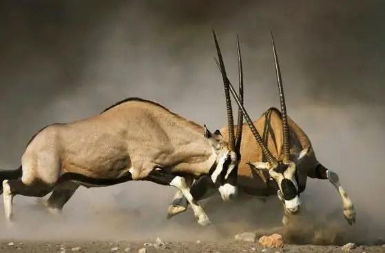 Kruger National Park (South African National Park)