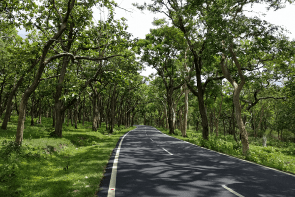 Bandipur National Park - National park in India