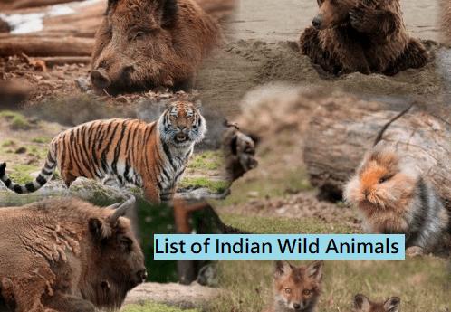 List of Indian Wild Animals