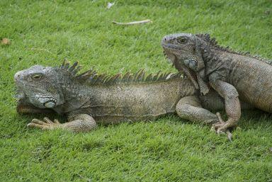 heerlijke beesten om te fotograferen, ik vind ze prachtig en ze zitten zo lekker stil en dichtbij!