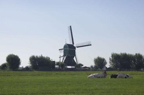 Hoe Hollands wil je het hebben