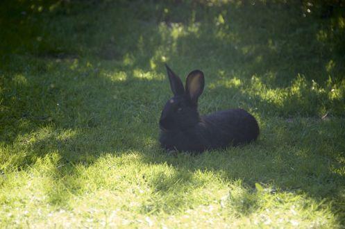 Hallo konijn, mogen wij daar onze tent neerzetten?