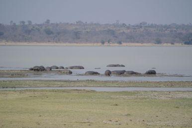 Het uitzicht op de hippo's vanuit ons hutje