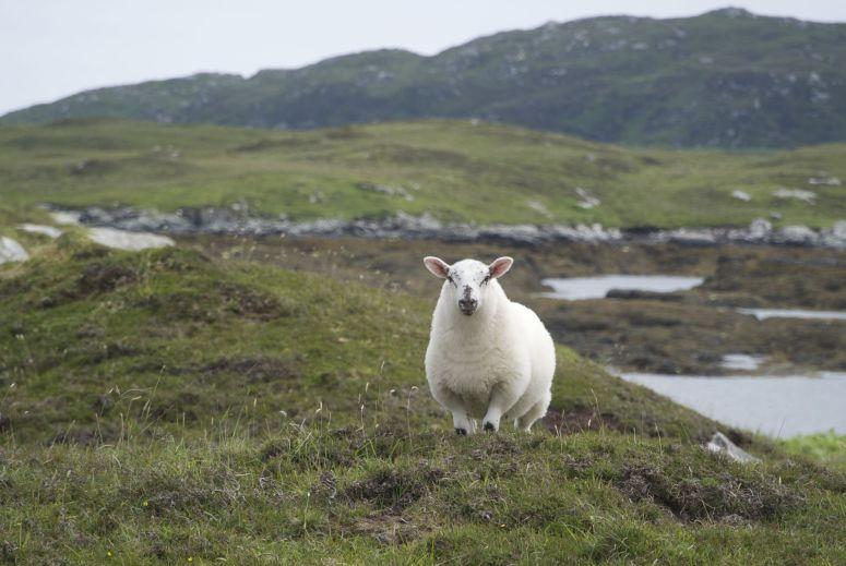 Het meest fotogenieke schaap dat ik ooit tegenkwam