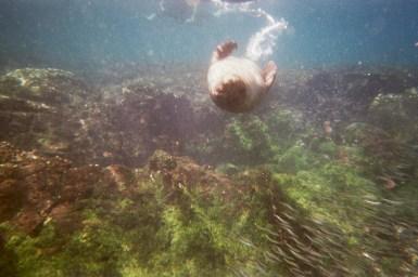spelen met een jonge galapagos sea lion