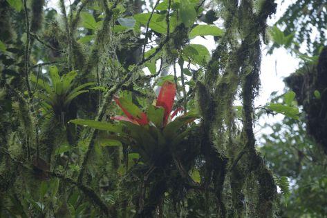San Sebastian Rainforest