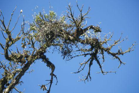 Deze grillige boom komt prachtig uit tegen de blauwe lucht van vandaag.