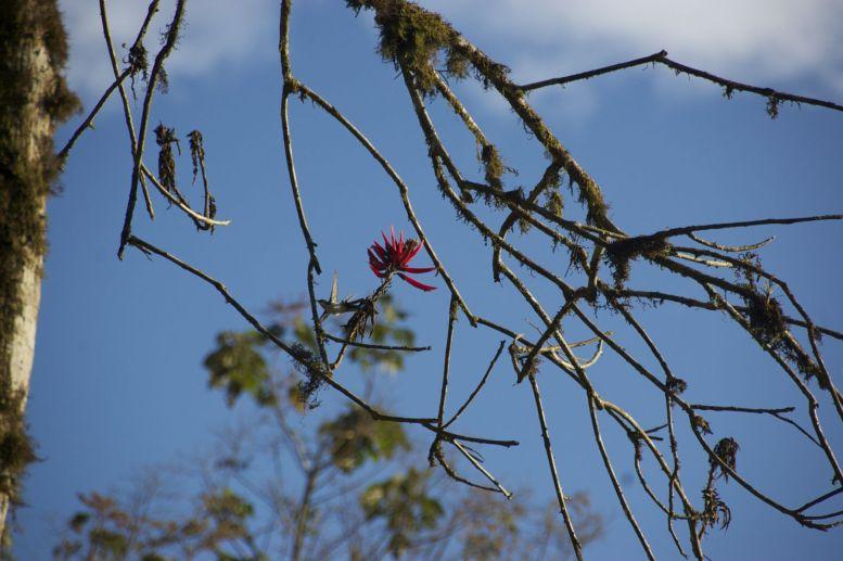 Even goed kijken, maar hier hebben we toch echt een kolibrie in het wild.