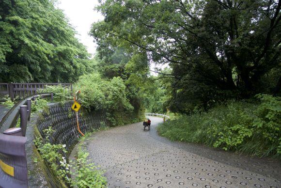 De steilste weg van Japan. Ik weet niet hoeveel uur we gedaan hebben over 2km...