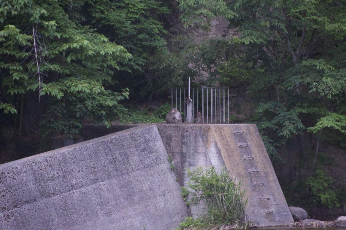 Apen! Aan de overkant van de rivier, helaas wat ver weg en al wat donker voor een goeie foto.