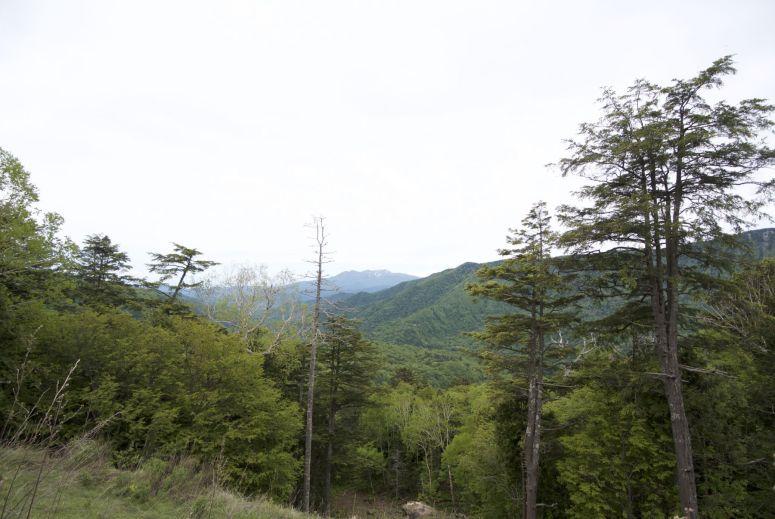 Omhoogklimmend zitten we meestal tussen de bomen, maar heel af en toe hebben we uitzicht.