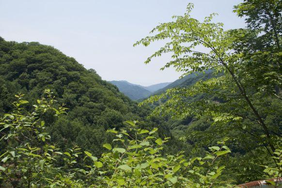 En het uitzicht is groen.