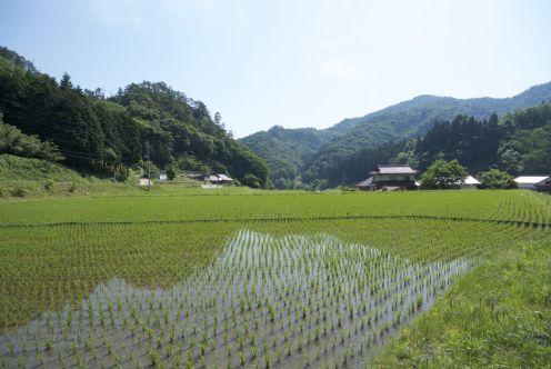 Japan is zo enorm groen, maar er is geen groen zo groen als rijstvelden.