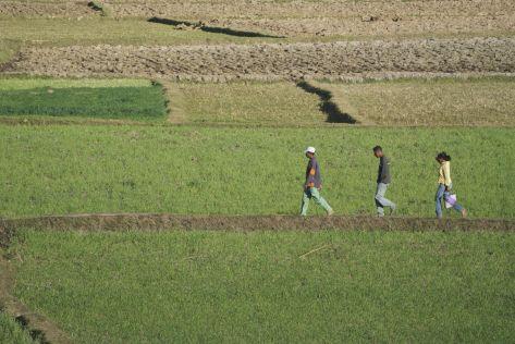 In Ambatolampy lijkt wat meer water voorhanden te zijn, dus de velden zien er flink groener uit.